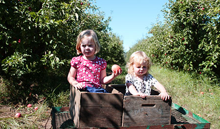 andthenthey apple picking crates